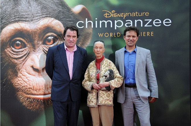 My Walk Down The Red Carpet Premiere of Disneynature's Chimpanzee