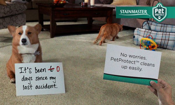 Sponsored Unshame Your Pets With Stainmaster Petprotect