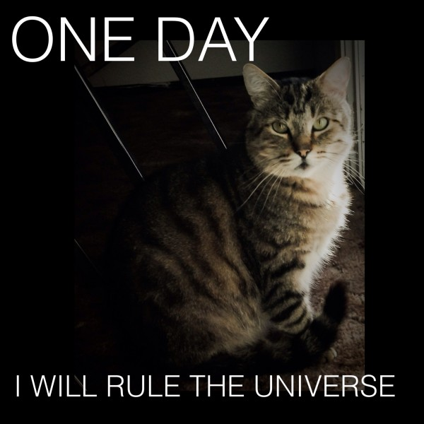 My Cat's Manifesto to Rule Our Home, and the Universe