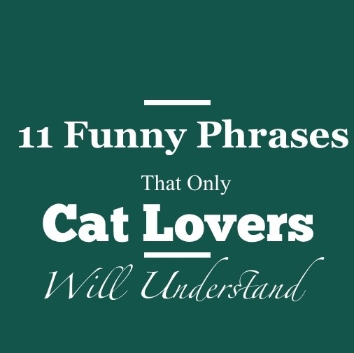 11 Funny Phrases That Only Cat Owners Will Understand - Clever ...