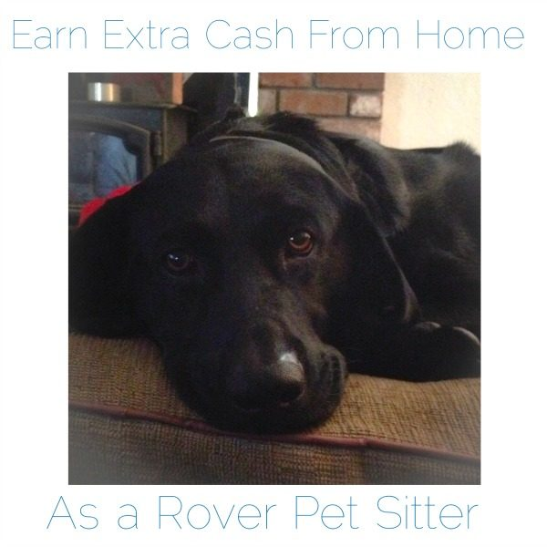 Earn Extra Cash Working From Home as a Pet Sitter for Rover.com