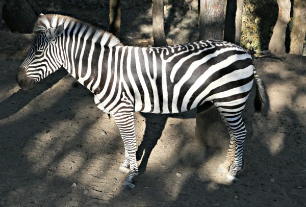 Planning for Your African Adventure at Safari West
