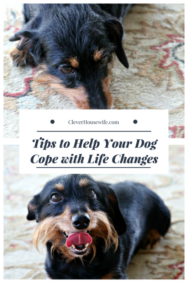 Tips to Help Your Dog Cope with Life Changes