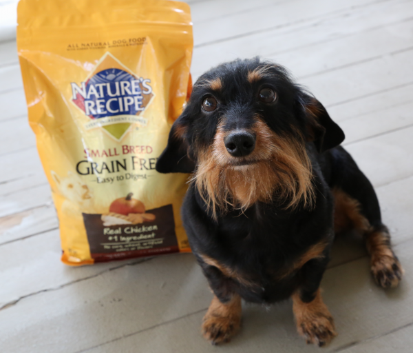 How to Safely Switch Dog Food
