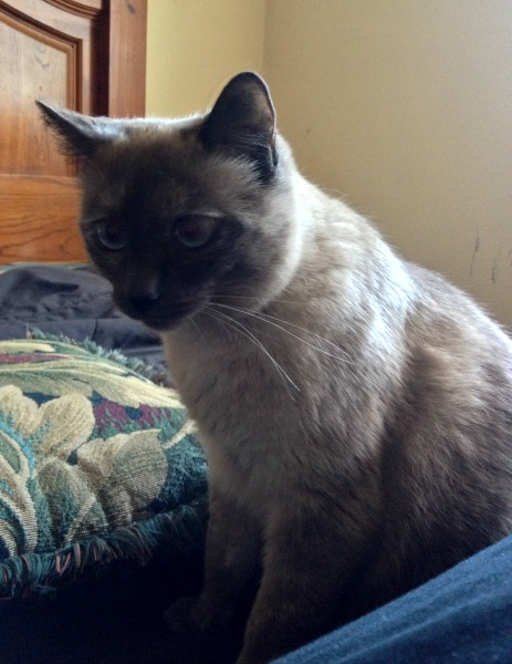 Fudgie the Cat