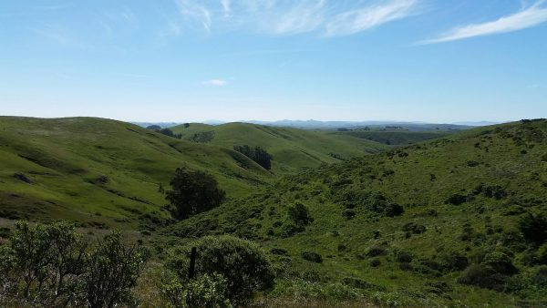 Bodega Bay and Sonoma Driving Tours