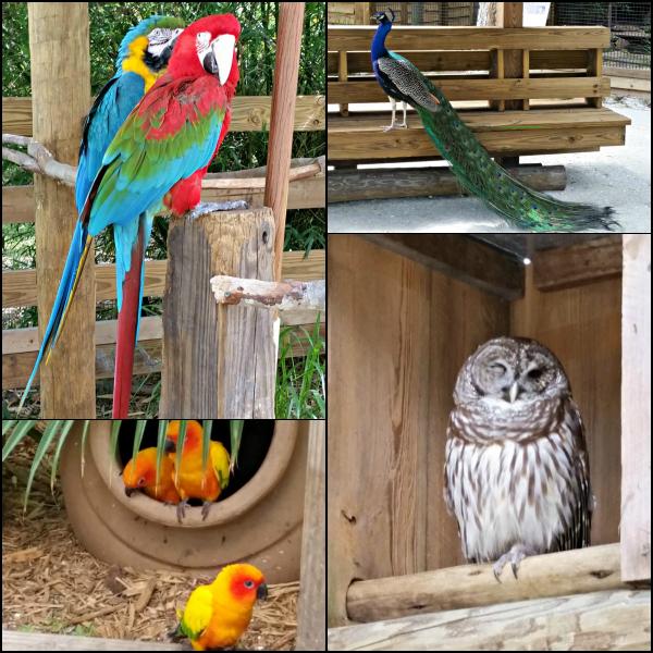 Wild Florida Birds