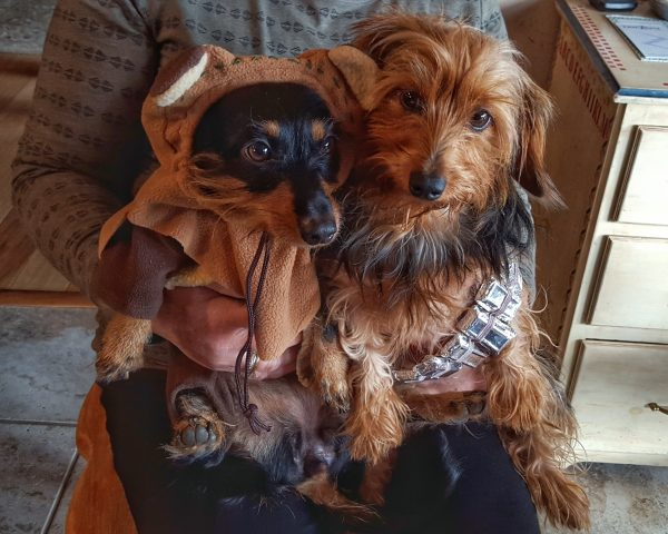 Ewok and Chewbacca Pet Costumes