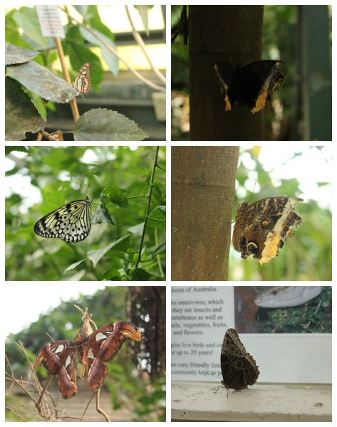 Butterflies in the Magic Wings Conservatory