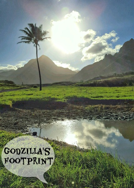 Godzilla's Footprint in Kualoa Ranch