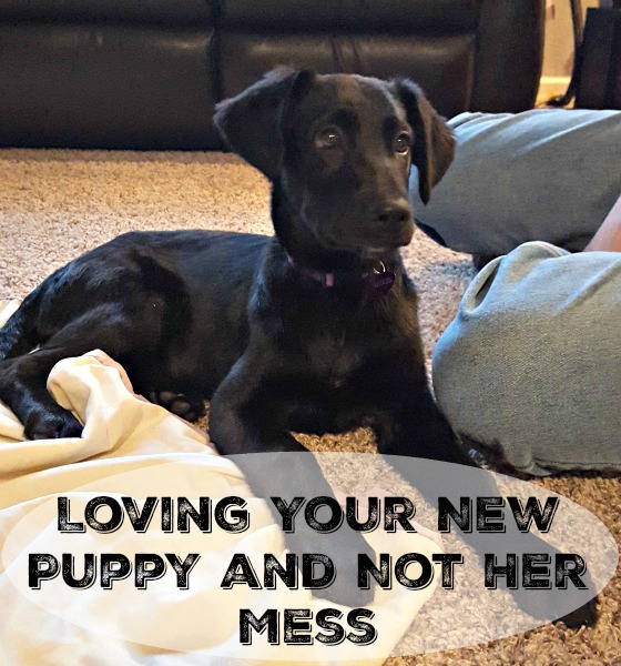 Loving Your New Puppy and Not Her Mess