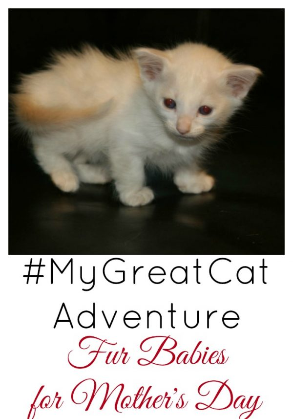 How we are celebrating #MyGreatCat Adventure day with Fur Babies for Mother's Day