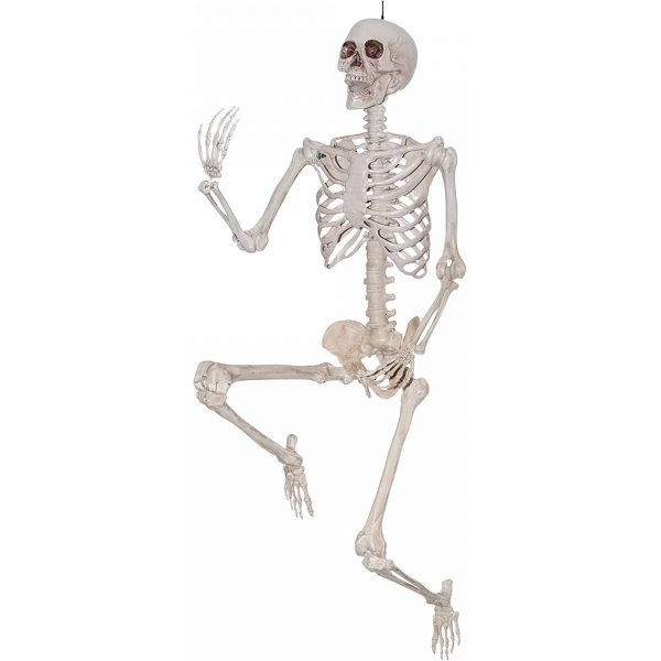 5-poseable-skeleton